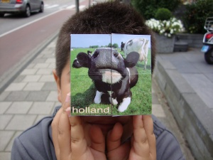 Cows of Holland