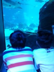 Watching the aquarium