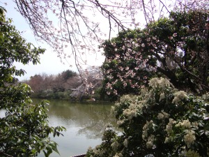 Enjoy the pond