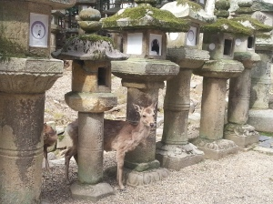 Famous lanterns and deers