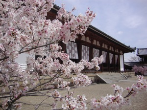 Horyu-Ji Temple with a lovely Sakura tree